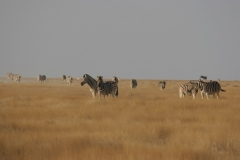2006-10-04_Namibia_017